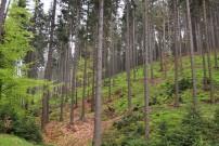 Der bewirtschaftete Wald leistet einen größeren Beitrag zum Klimaschutz. Quelle: Martin Wöhrle