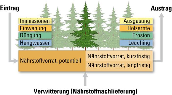 Faktoren einer Nährstoffbilanz für einen Waldstandort