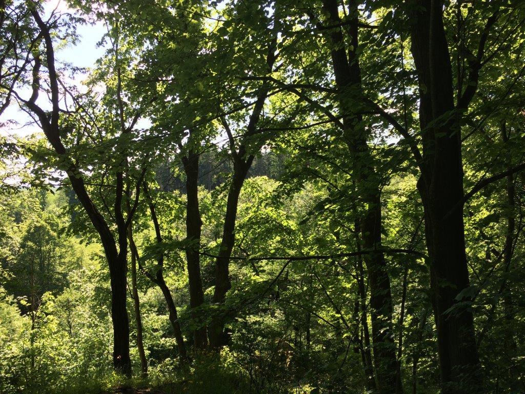Besitzer sorgen für den Wald