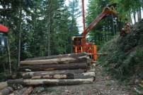 Bewirtschaftung fördert Multitalent Wald