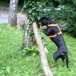 Spürhund nimmt Fährte auf