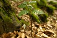 Wald am Kristakopf