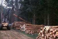 Holzlager neben Forstweg
