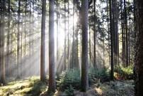 Waldstrategie 2020, ein Weg in die Zukungt, Quelle: Schima