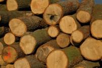 In Österreich gibt es keinen illegalen Holzeinschlag