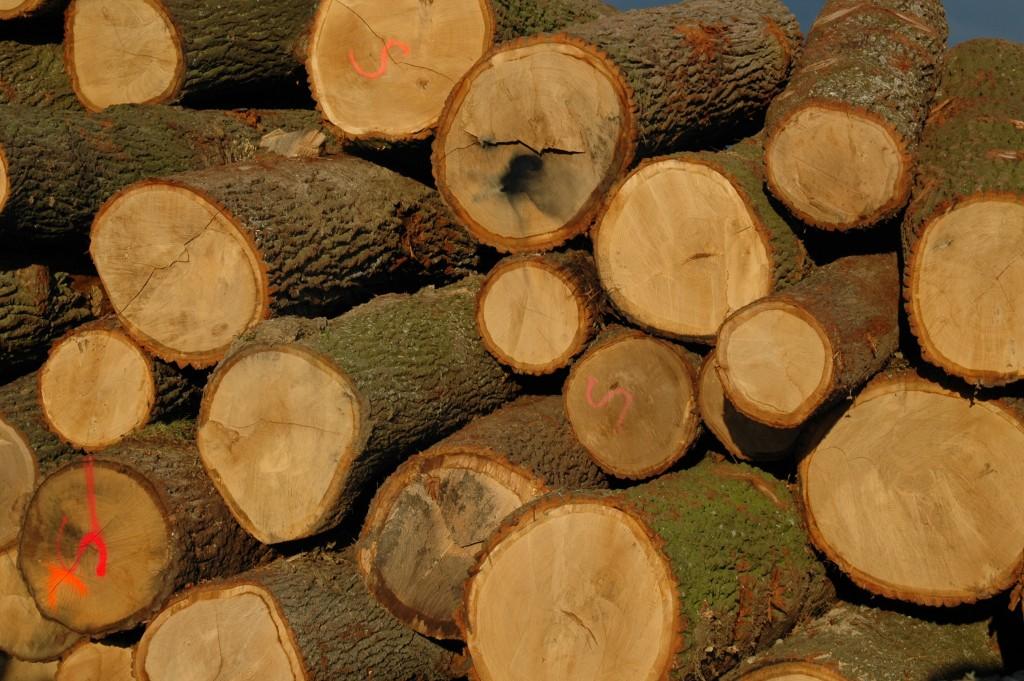 In Österreich gibt es keinen illegalen <span class='term-desc-marker' alt='Holzeinschlag'>Holzeinschlag</span>