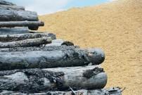 Holzplatz Holz für Zellstoff und Papierproduktion