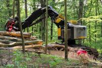 Risiken Steigerung Energieholzmenge