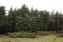 BFW, Institut für Waldschutz @ DI Gottfried Steyrer