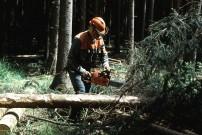 Forstarbeiter © BMLFUW