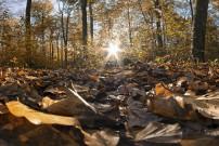 Herbst © rabedirkwennigsen pixabay.com