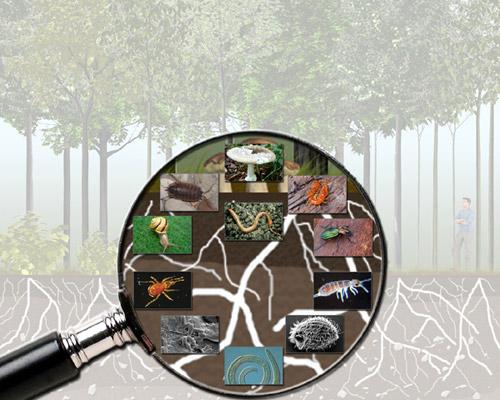 © Bundesforschungszentrum für Wald