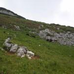 Weidende Schafe auf der Schoberwiese