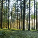 Beruhigende Waldatmosphäre im Kobernaußerwald (OÖ)