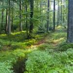 Wald als Öko-Klimaanlage