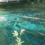 Der Wald unter Wasser, Kärnten