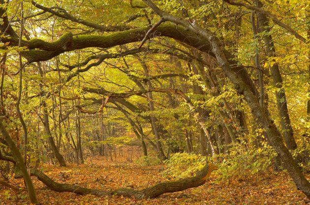 Herbststimmung im Hochsommer_Trockenstress bei Bäumen