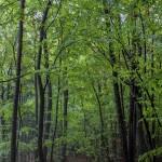 Wald im Frühherbst, Übersbach