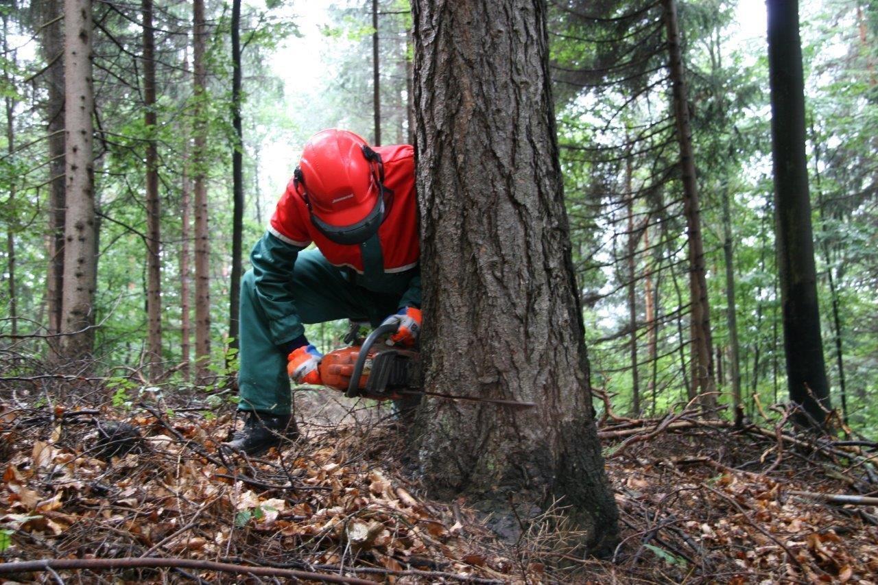 Arbeit im Wald